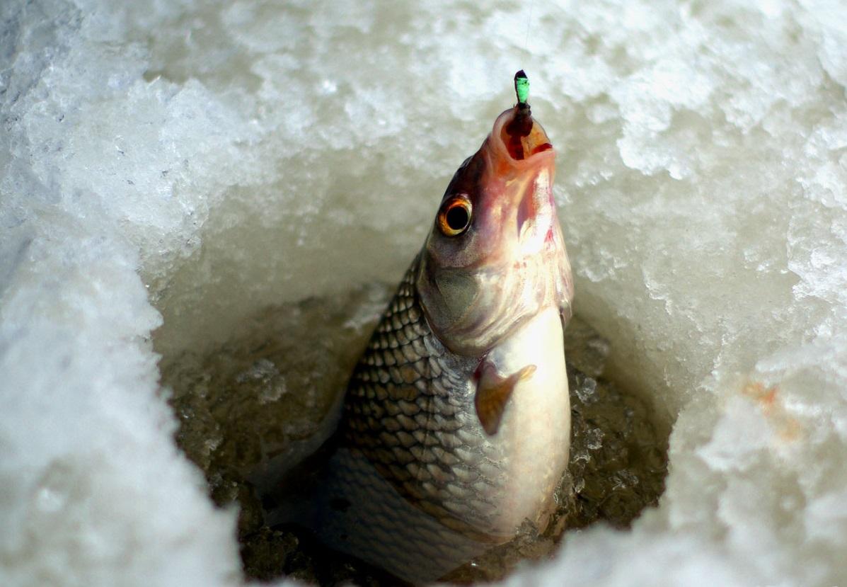 рыбалка в уфе завтра