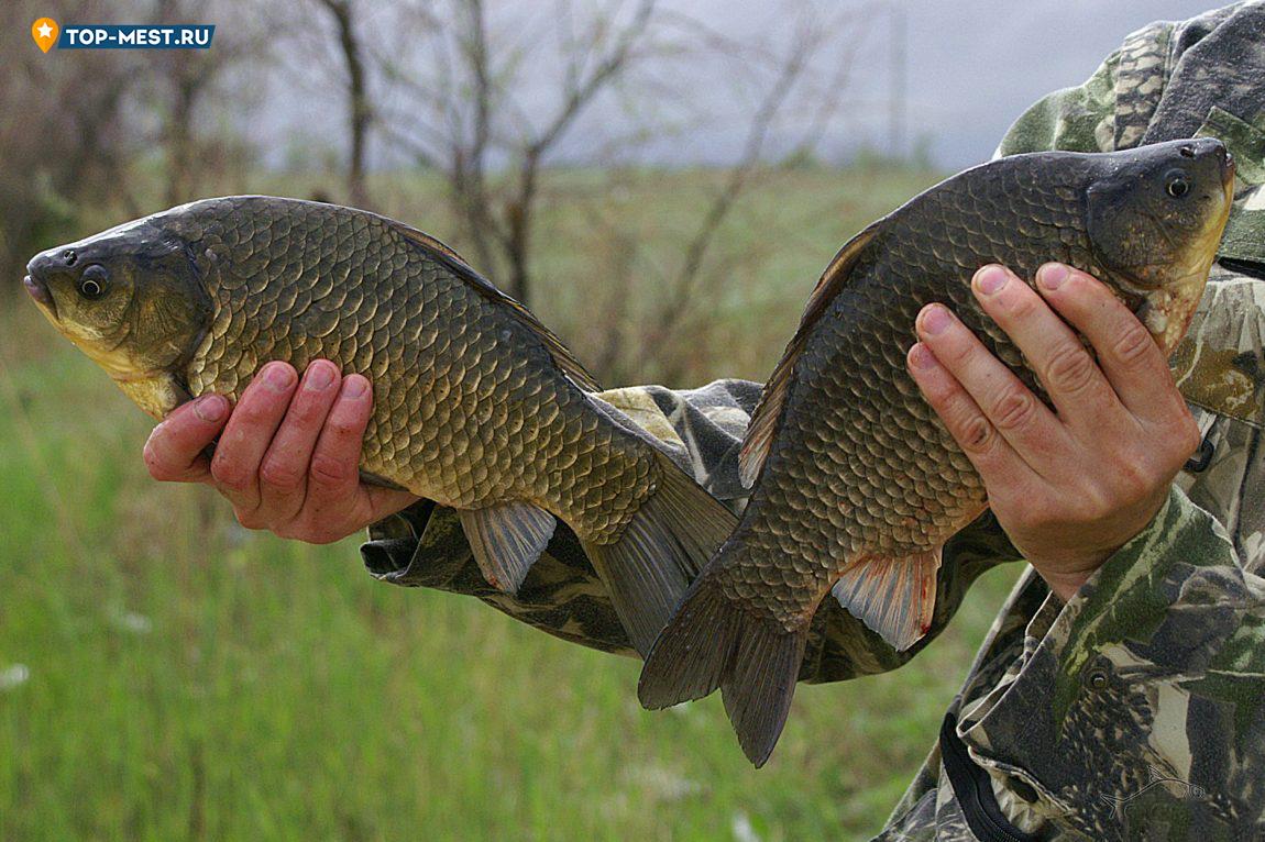 На что можно ловить рыбу карась