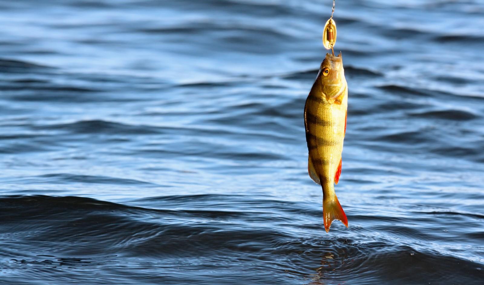 места рыбалки в россии